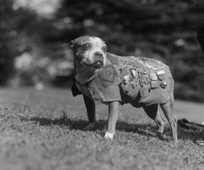Stubby ~ decorated World War I hero
